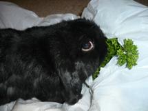 Boo eating parsley
