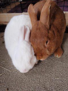 Quigley & Eve
