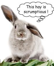 Hay Bunny