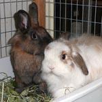 Edmund and Truffles