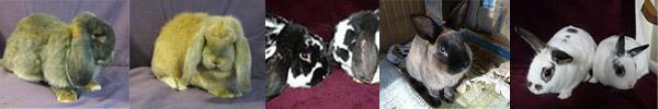 available bunnies - sept 2011