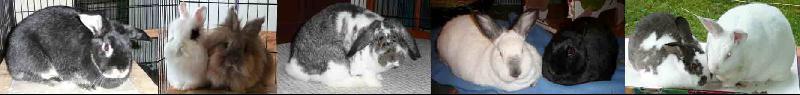 adoptable bunnies