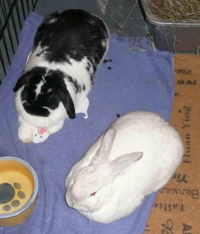 Thumper and Blue