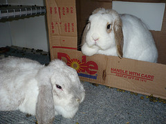 Jenny & Jewlie