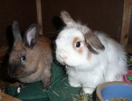 Edmond & Truffles
