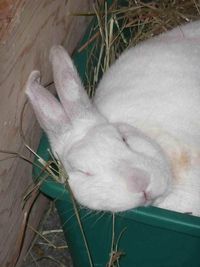 Casper sleeping