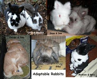 Adoptable Bunnies Jan 2009