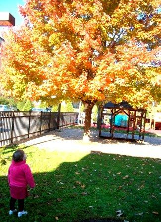 UCDC Fall Playground