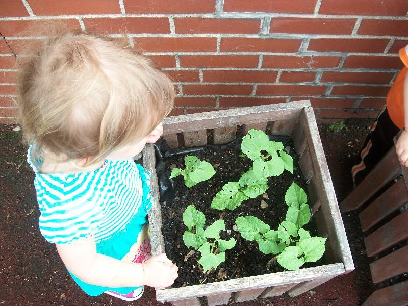 Child Planting Beans