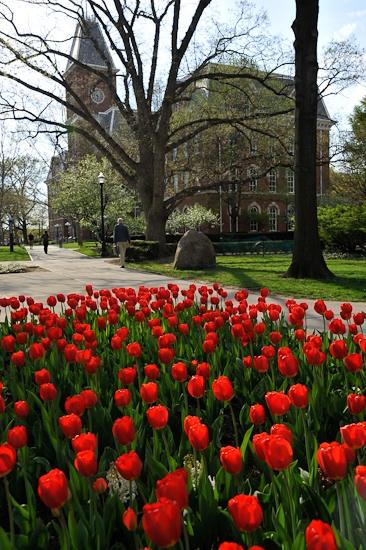University Hall and Tulips