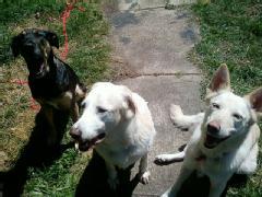 Patrick Land dogs