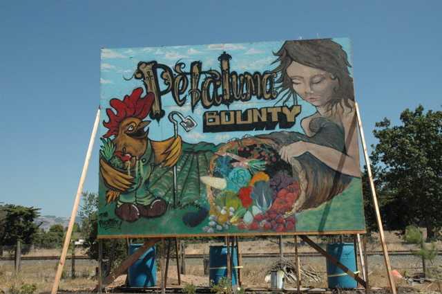 Petuluma County