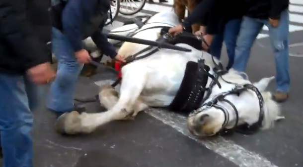 Quinn kills bill to ban horse-drawn carriage