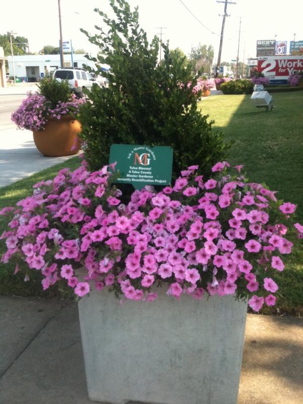 Tulsa Blooms
