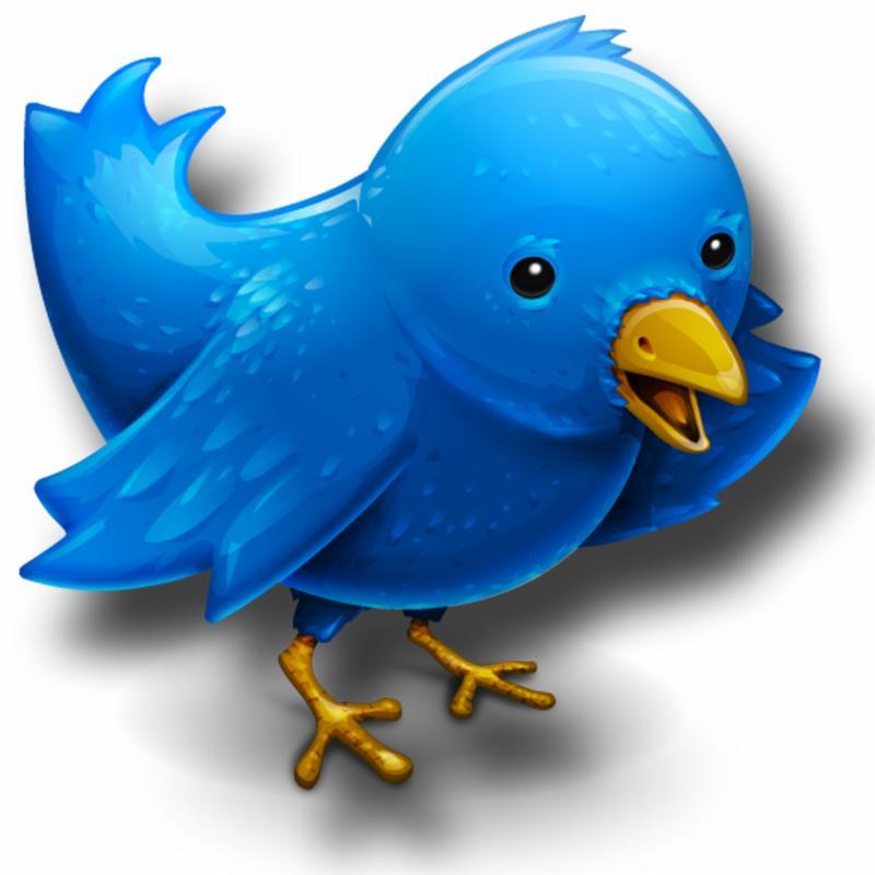 CELF Twitter bird