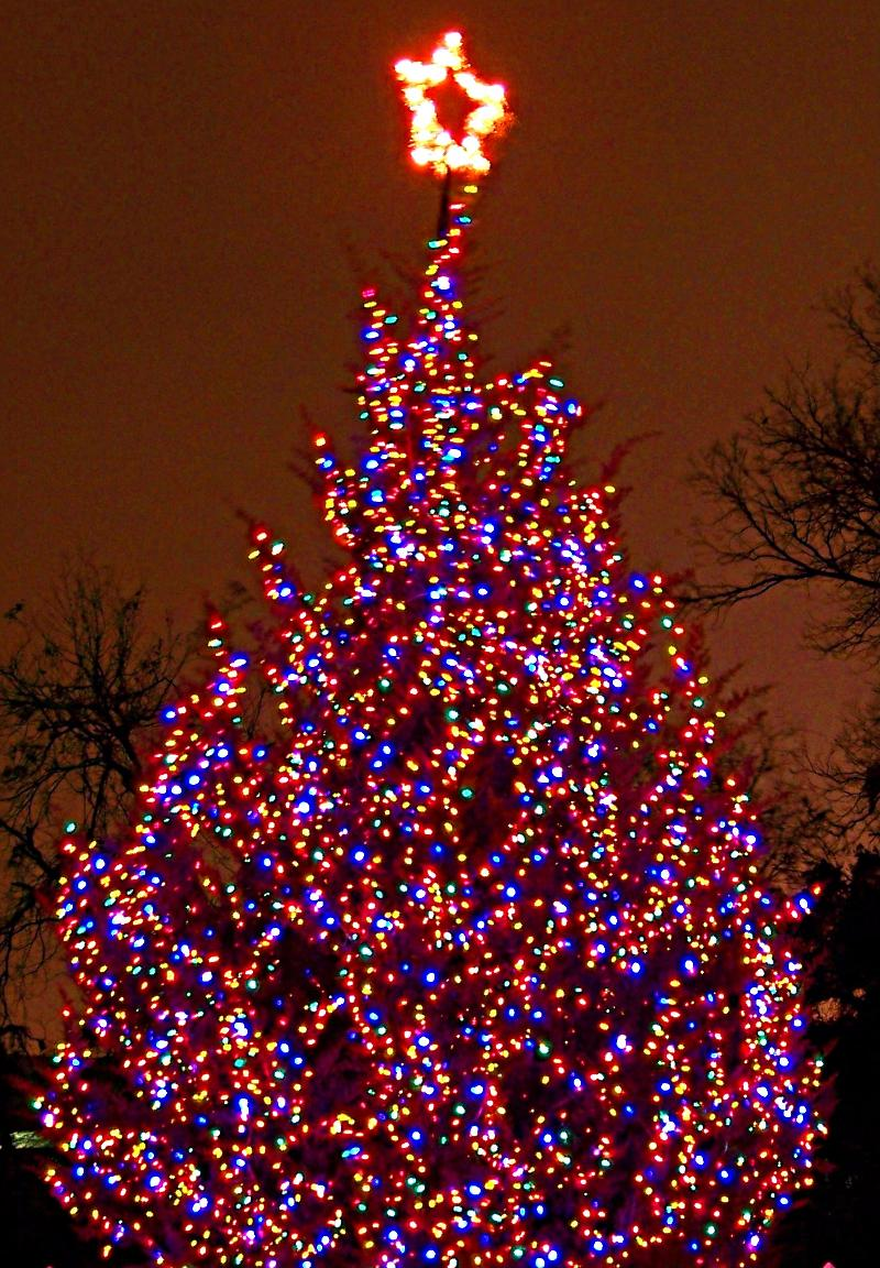 Christmas Tree Tight Crop