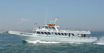 Miss belmar tropical adventure fishing report for 8 8 11 for Belmar princess fishing report