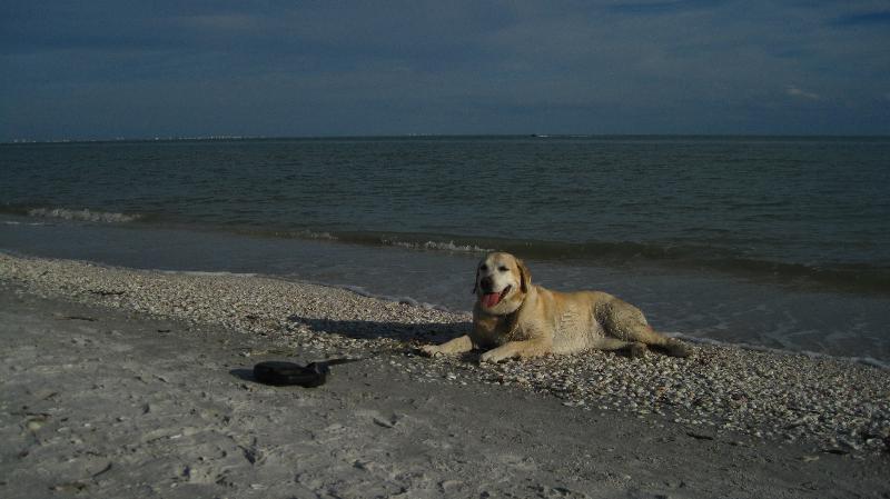 Bella Thomas lounging on Sanibel Island, FL