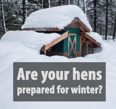 Preparing your flock for Winter Blog