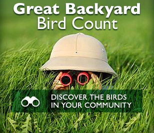the great backyard bird count will be held february 14 17 2014