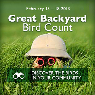 birds canada the great backyard bird count gbbc has been taking