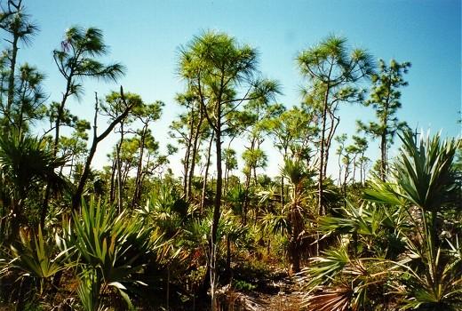 pine rockland