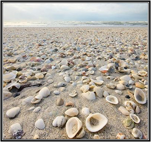 Seashells, driftwood, and sand are the inspiration colors.