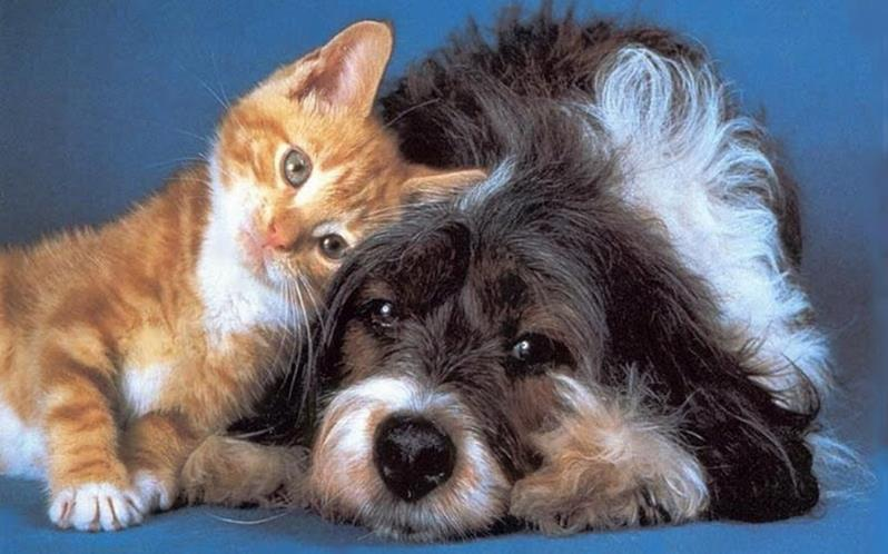 Dog and Cat - Animal Shelter
