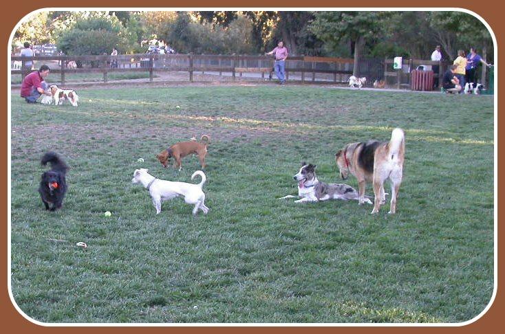 hap mcgee dog park