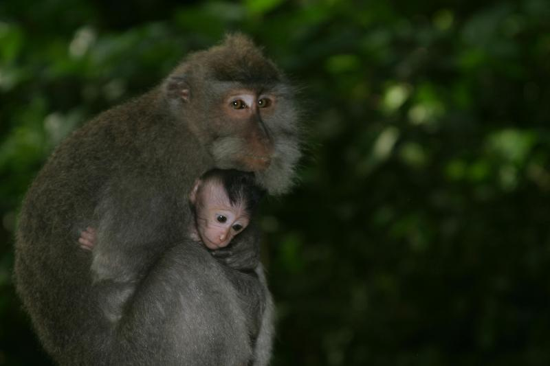 beautiful monkeys