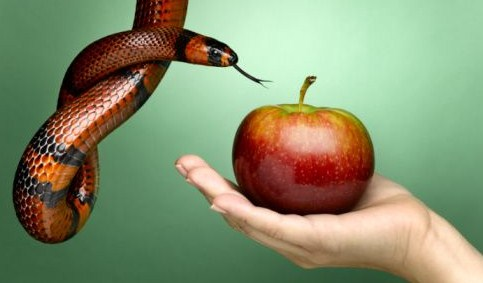 serpent offers fruit