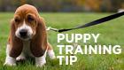 pup.training.tip
