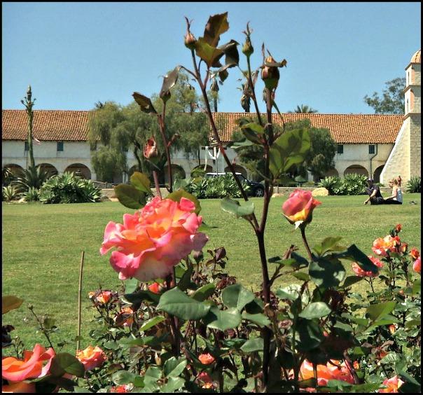A.C. Postel Rose Garden