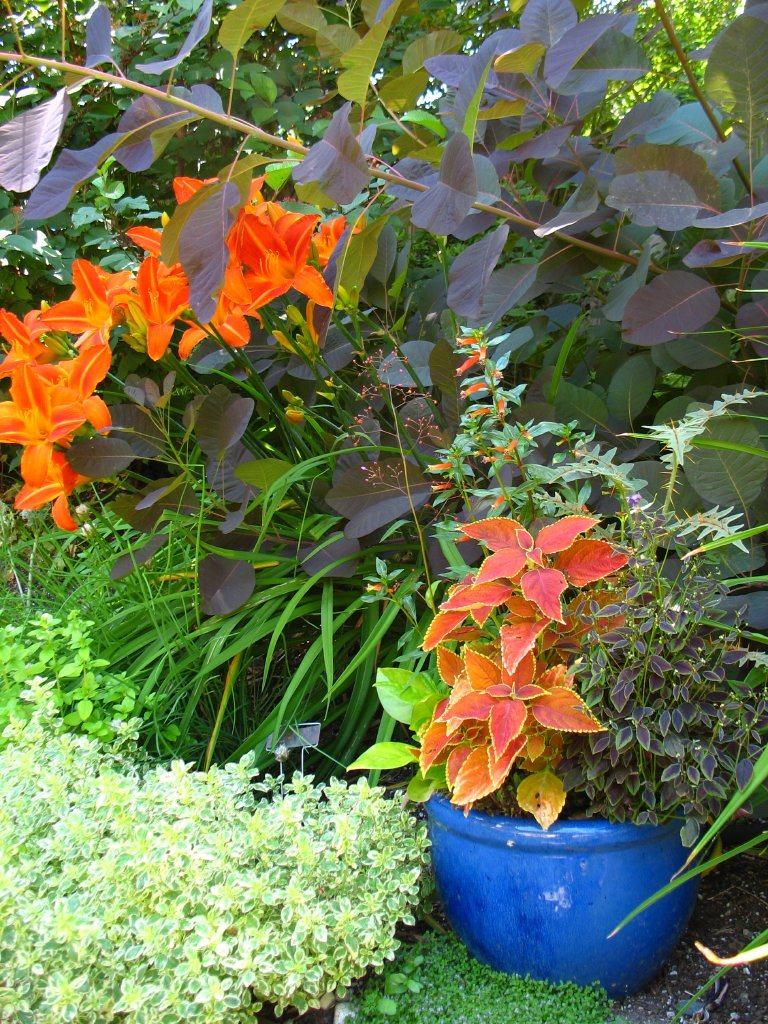 Daylily in border