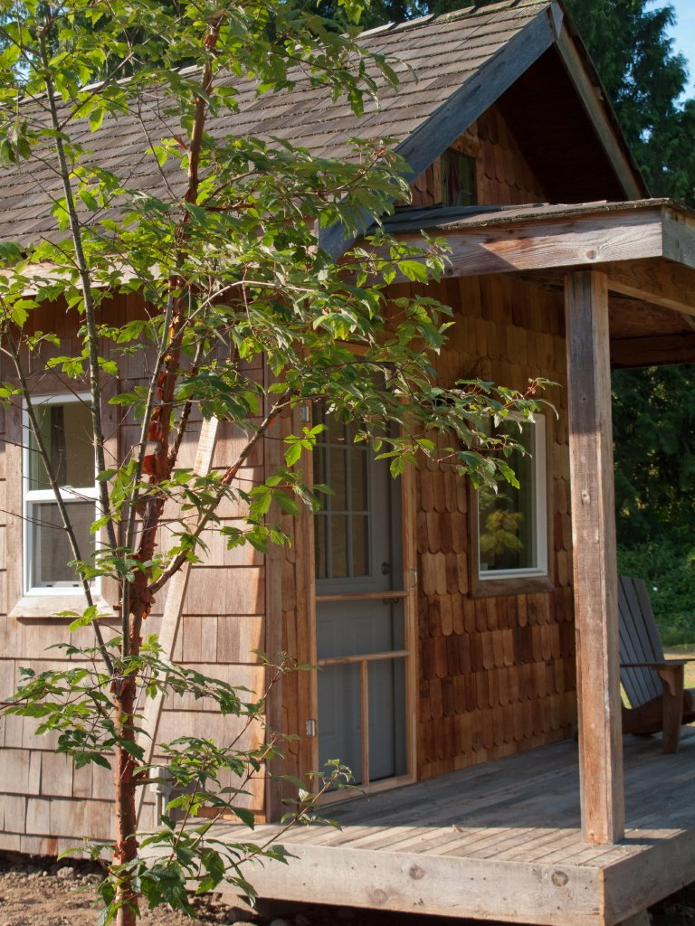 Paperbark maple and cabin