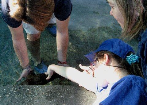 Elina and shark 2012