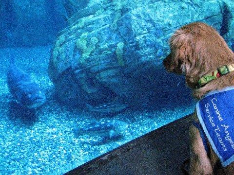 Salsa meets fish