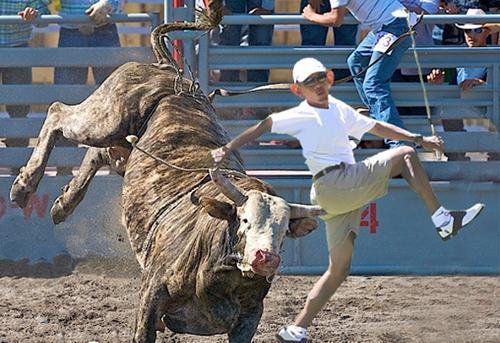 Bull & BO