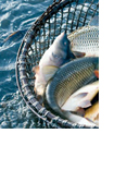 NL_seafood
