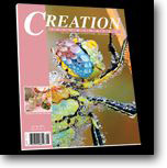 Creation Illustrated