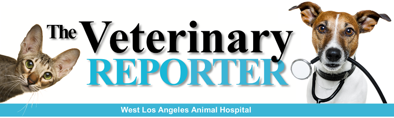 The Veterinary Reporter