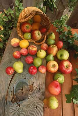 fruit-basket.jpg