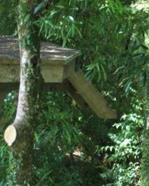 canopy platform