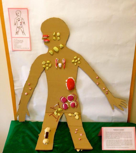 9-12 Immune System