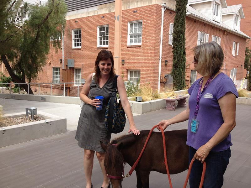 Bambauer, Jane (pony)