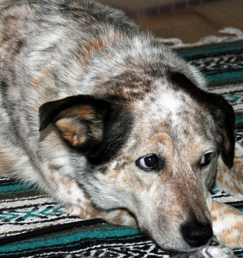 Barkley at Shanti Yoga