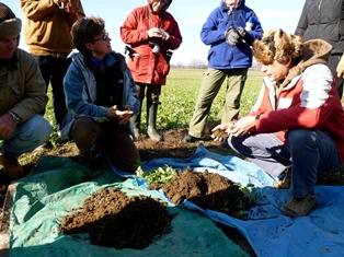 Comparing biodynamic and conventional soil