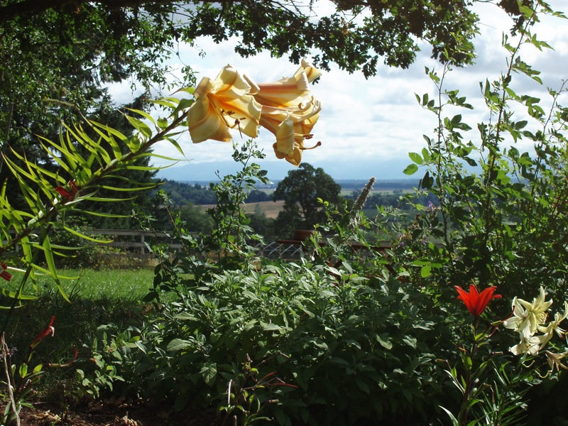 view of property through lilies