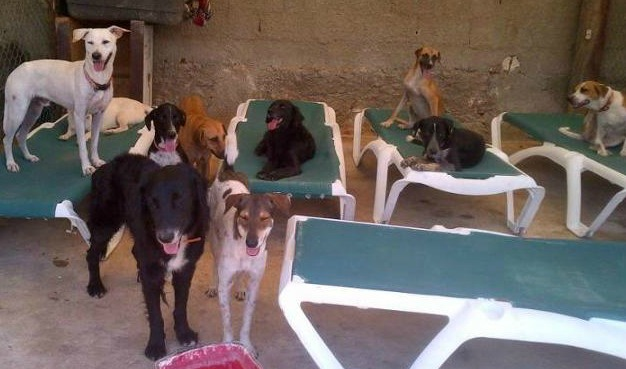 SOS el Arca shelter for dogs