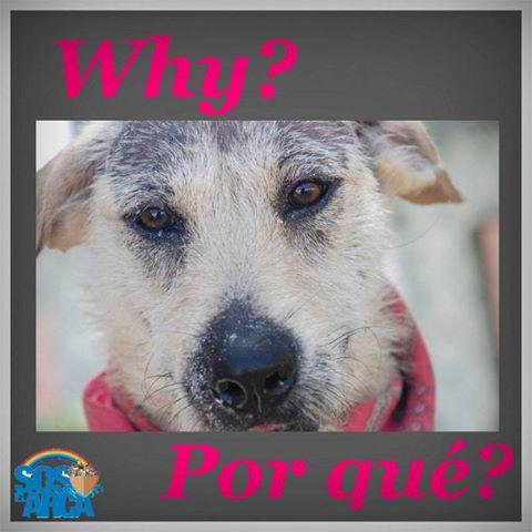 Dog Shelter Help Us Playa del Carmen